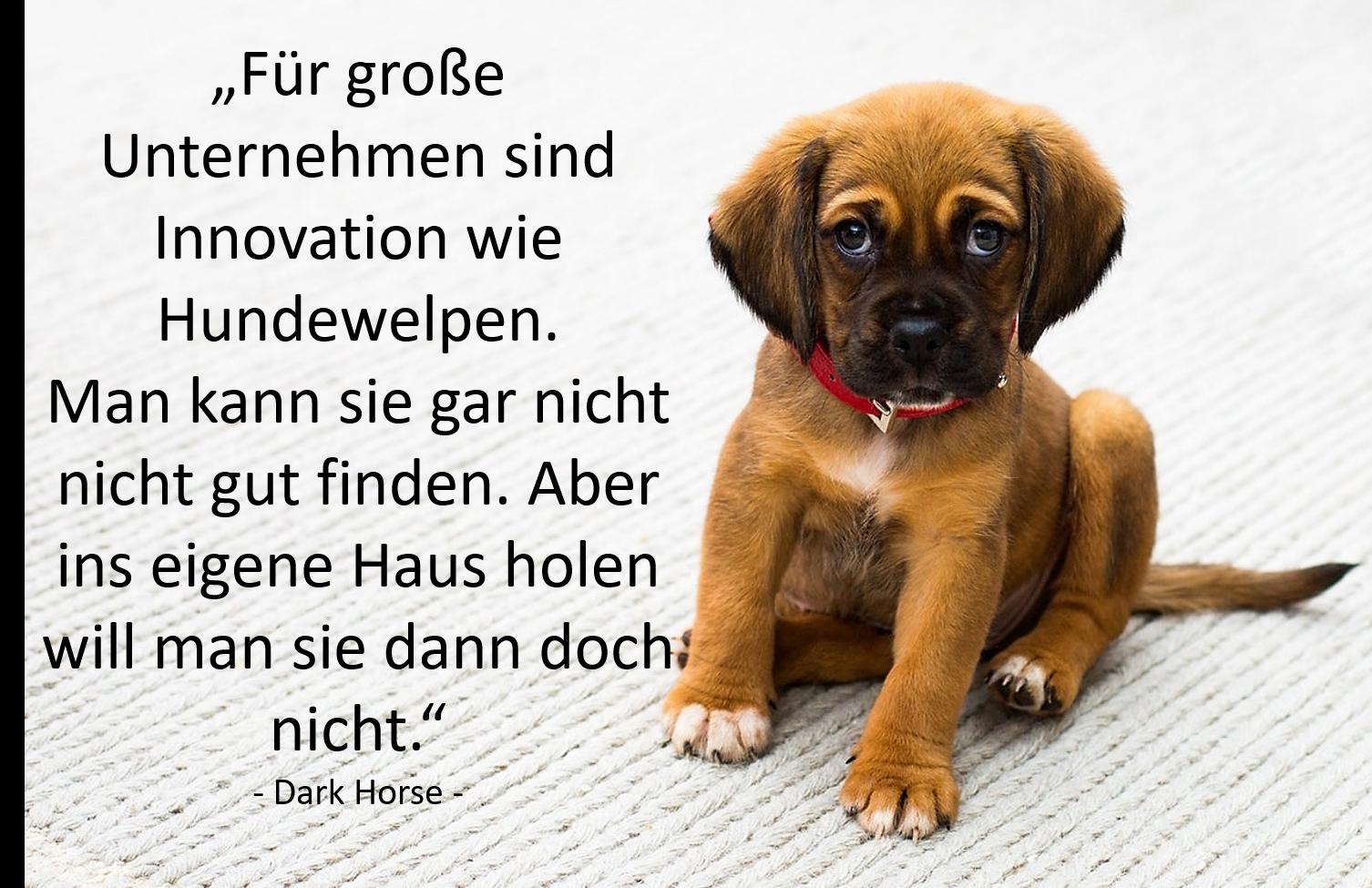 Thank God it's Monday Hundewelpen und Innovation